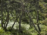 Las bagienny, Słowiński Park Narodowy