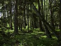 Las naturalny, Słowiński Park Narodowy