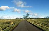 Droga do Górkowskiego Lasu
