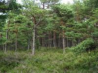 Górkowski Las